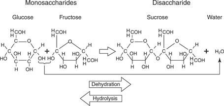 Glukosa dan fruktosa