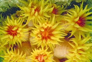 koral atau karang