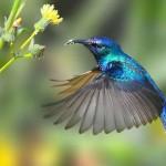 burung pemakan nektar