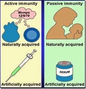 Perbedaan Imunitas aktif dan Imunitas Pasif