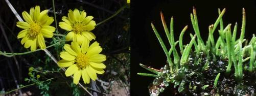 Perbedaan Tumbuhan Vaskuler dan Non Vaskuler