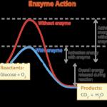 aktivitas-enzim