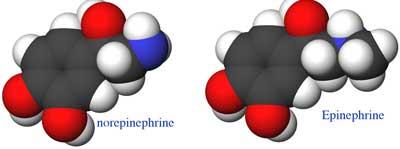 Epinefrin dan Norepinefrin