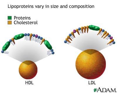 Perbedaan Kolesterol HDL dan LDL