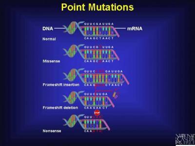 Perbedaan antara Mutasi dan Rekombinasi