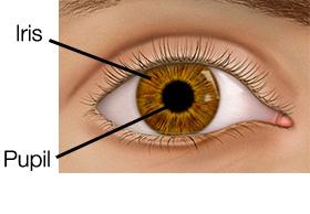 iris dan pupil