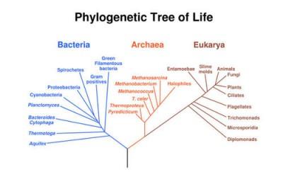 Sistem klasifikasi carolus linnaeus dan binomial nomenklatur 1