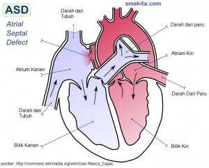 Bagian-bagian Jantung manusia dan Fungsinya