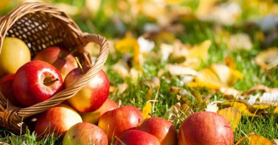 Buah Apel yang sudah tua dapat menghasilkan gas etilen