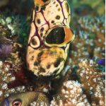 penyemprot laut
