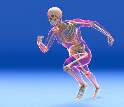Fungsi rangka tubuh manusia