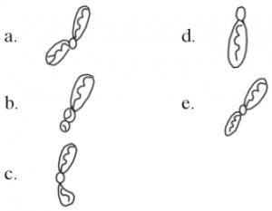kromosom metasentrik