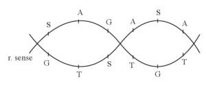 Soal dan jawaban tentang sintesis protein biologi usaha321 transkripsi ccuart Image collections