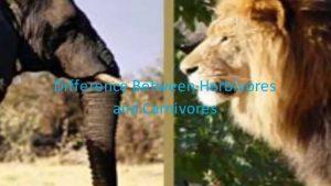Perbedaan antara herbivora dan Karnivora