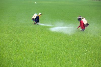 pestisida serta insektisida