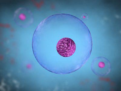 Nukleus sel adalah salah satu organel sel yang terdapat dalam sel eukariotik. Nukleus merupakan sebagian besar materi genetik sel - DNA
