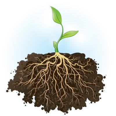 Akar tumbuhan
