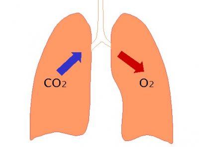Karbon dioksida adalah produk limbah yang harus terus dikeluarkan dari tubuh. Namun, CO2 juga penting dalam mengatur pH cairan tubuh kita.