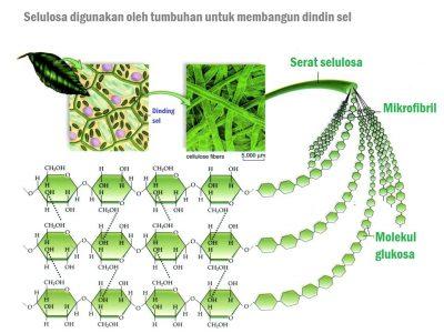 Struktur Selulosa